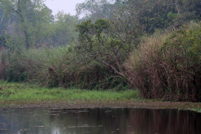 marshand - FC habitat